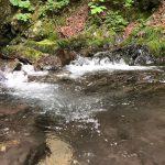 川のせせらぎに癒やされる夏