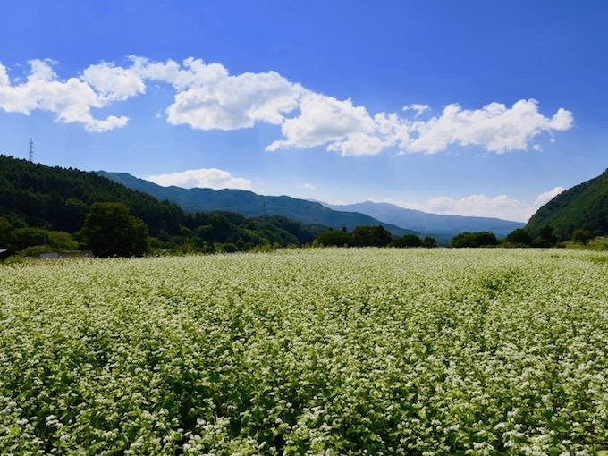 大日向の蕎麦畑全景