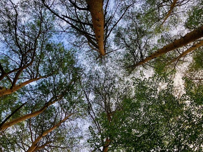 信州の森の中で