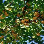 青空が心地よい秋晴れの大日向から八千穂へ