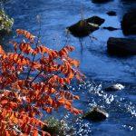 晩秋の大日向で探す秋の色