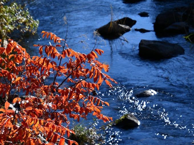 晩秋の大日向で秋の色を探す