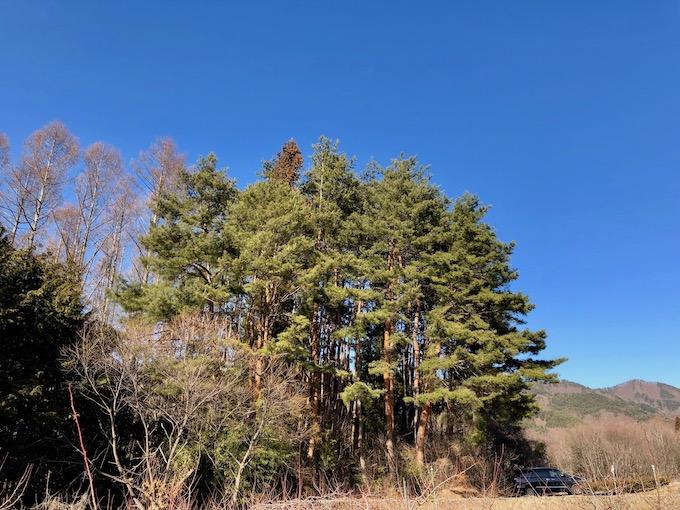 信州の春を感じつつ過ごす午後