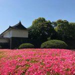 江戸城ってどんな場所だったのかなあ。