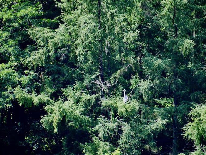 樹上にみえる大きな鳥は