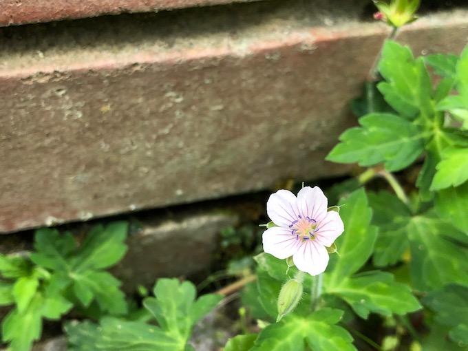 小さな花の輝きを見逃すな
