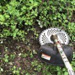 草刈りと健康診断からメンテナンスを考える。