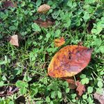 一気に秋がやって来る予感