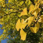 季節の変わり目と体調管理