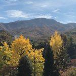 校庭の銀杏と茂来山を眺めながら