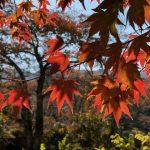 秋深まる大日向にて静けさを感じる