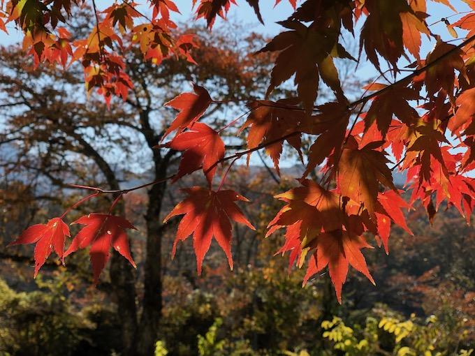 秋深まる大日向