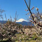 春の訪れは「小田原梅まつり」からだけど…