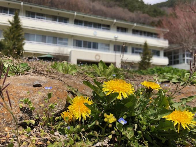 たんぽぽが元気な大日向の春