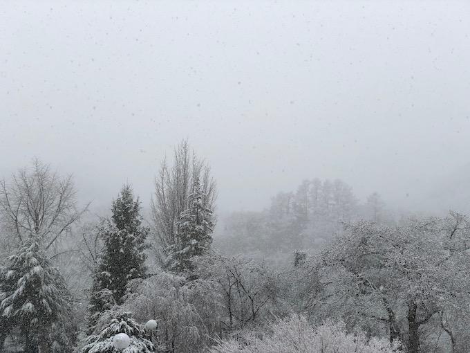 春の雪はきれいなんだけれど