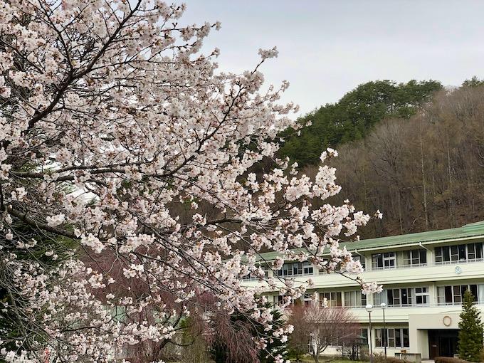 桜を眺めつつ長期戦に備える日々
