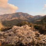 夕刻の桜と茂来山を眺めて