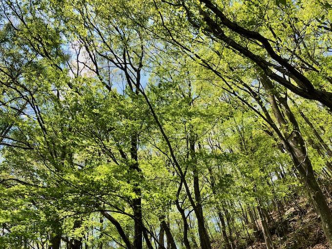 新緑の季節を実感する