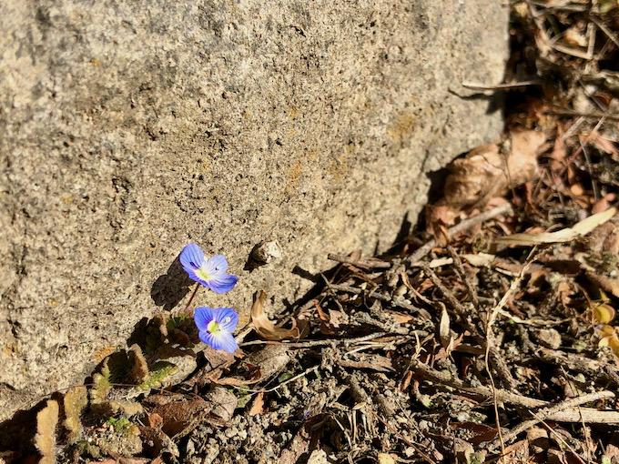 遠い春に向かう命を見つけて