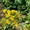 菜の花畑と休耕地
