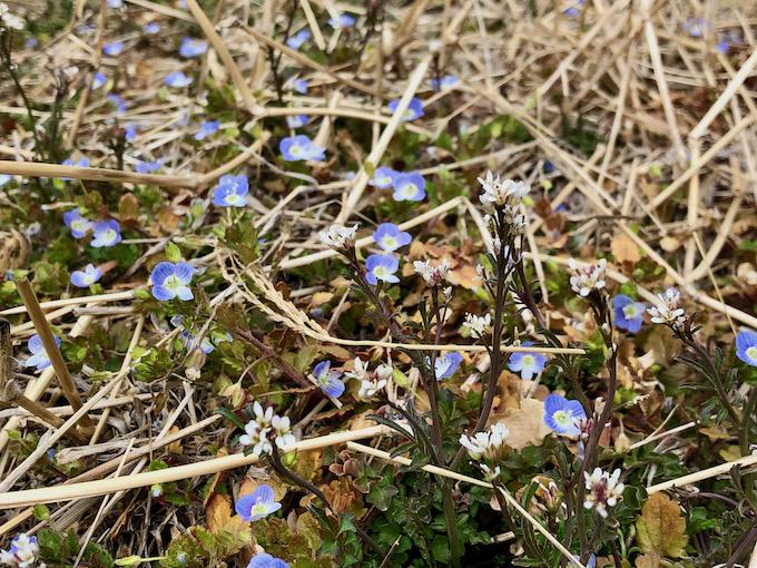 賑やかな春の花たち