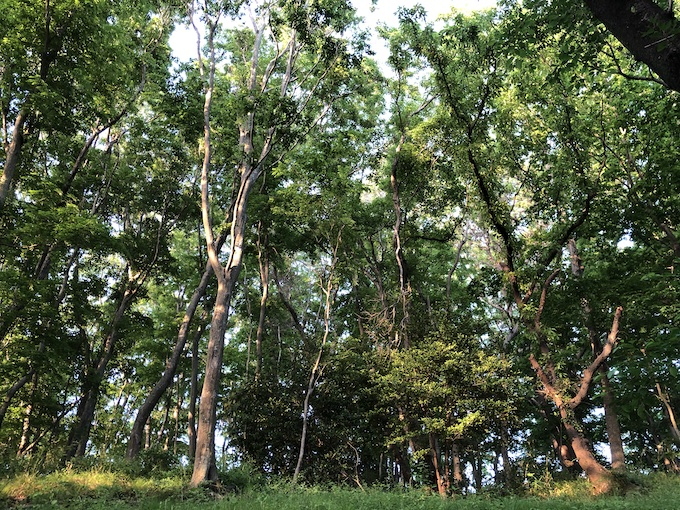 森の中で朝ランを楽しむ