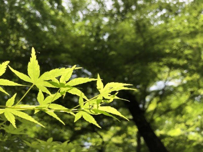 新緑の中を歩き回る