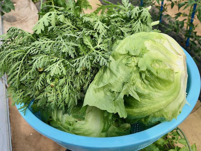 御縁と学校と新鮮な野菜