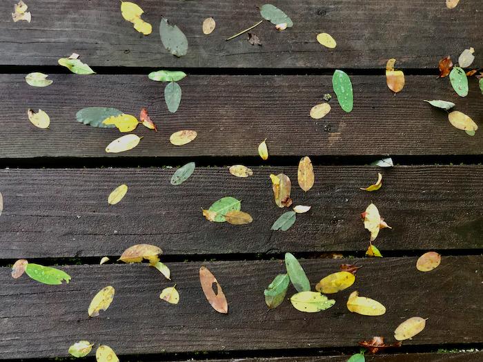 パッと見れば葉っぱだけど良く見れば